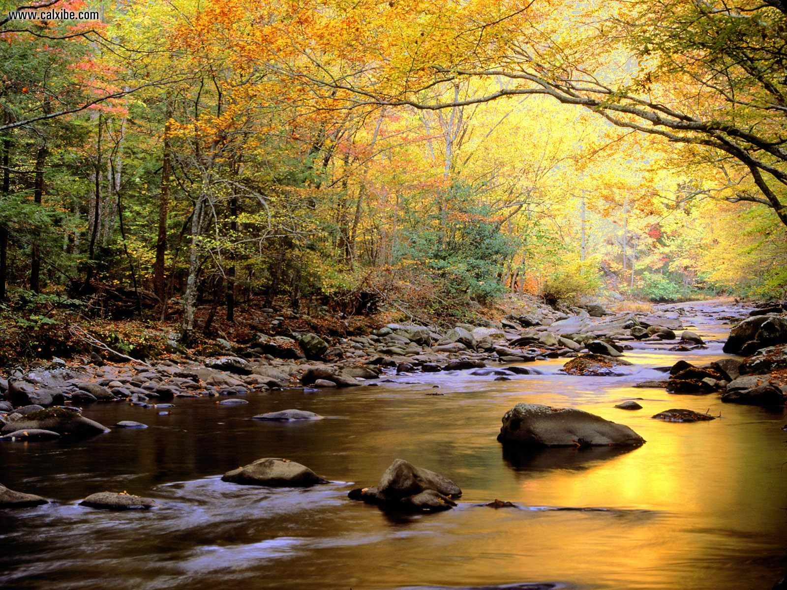 Little River In Autumn Great Smoky Mountains National Park Tennessee 1600x1200