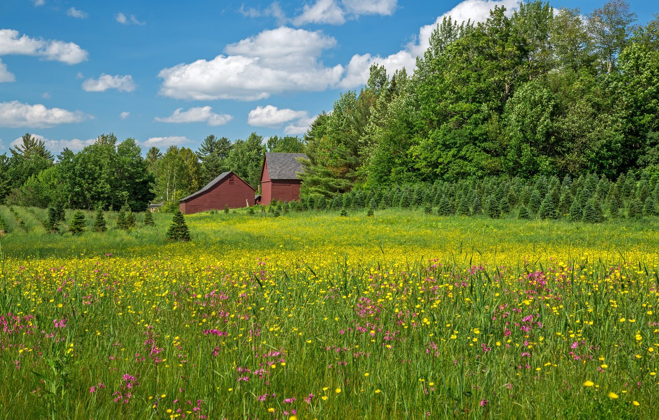 Wallpaper trees flowers home meadow New Hampshire New 1332x850