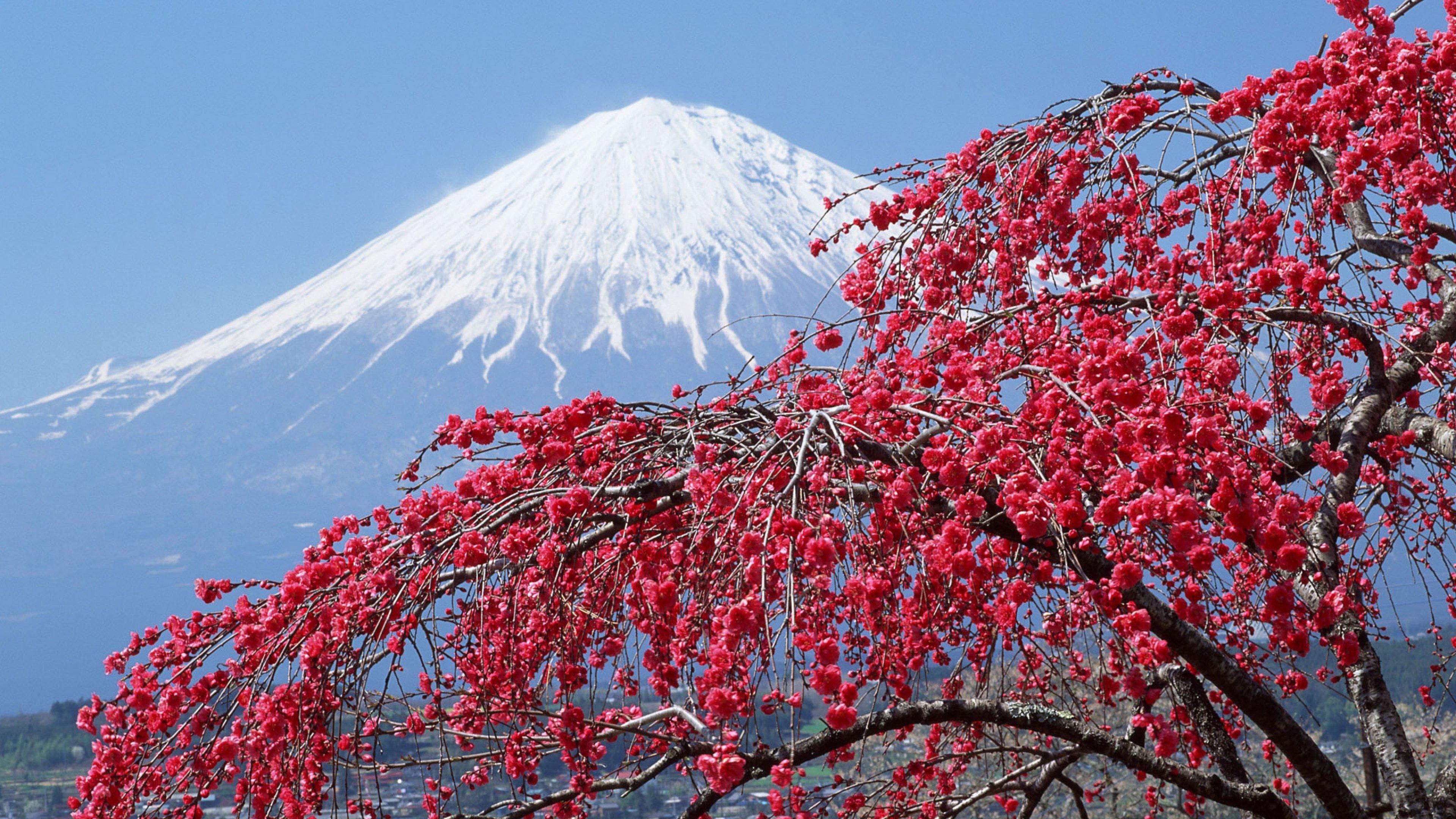 in japan Japan Sakura Mountains Wallpaper Background 4K Ultra HD 3840x2160