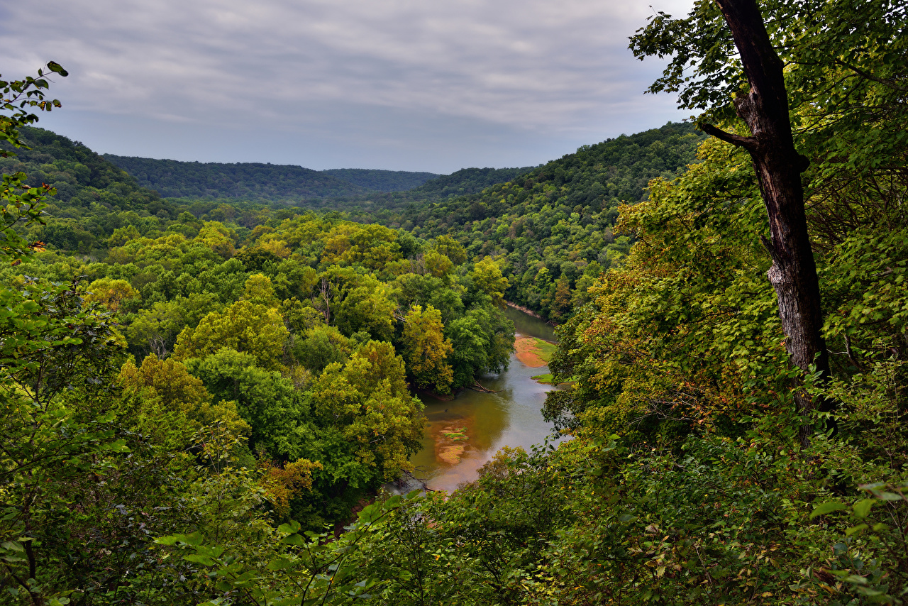Picture USA Mammoth Cave National Park Nature Parks Forests Trunk 1280x854