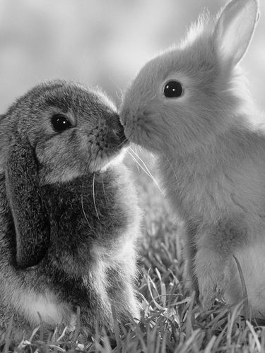 Two cute rabbits screensaver for Amazon Kindle 3 375x500