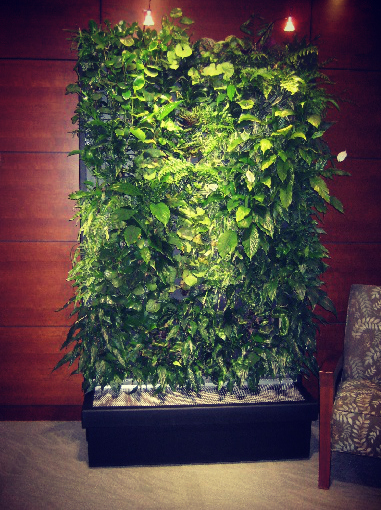 Living Green Walls The Wallpaper of the Future is Alive Greener on 381x510