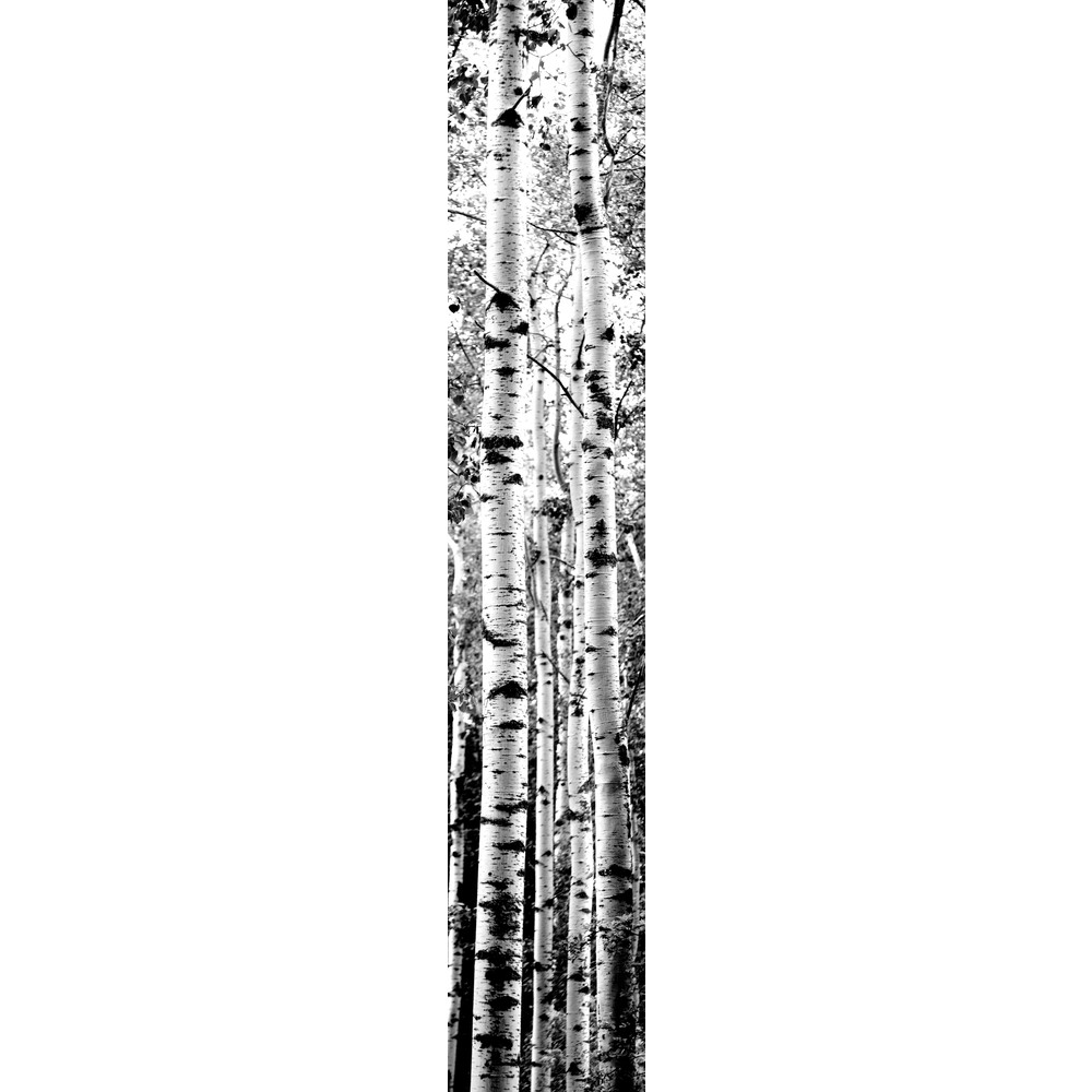 JP London Prepasted Birch Trees Forest Black and White Full Wall Mural 1000x1000