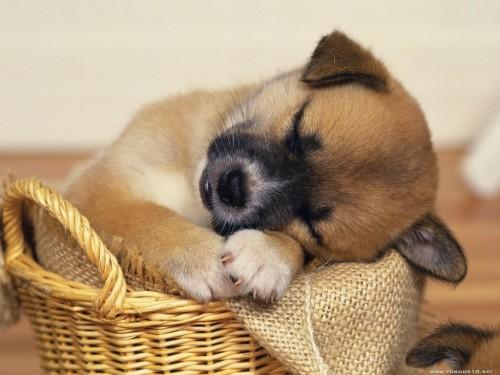Little Dog Screensaver Screensavers   Download Little Dog 500x375