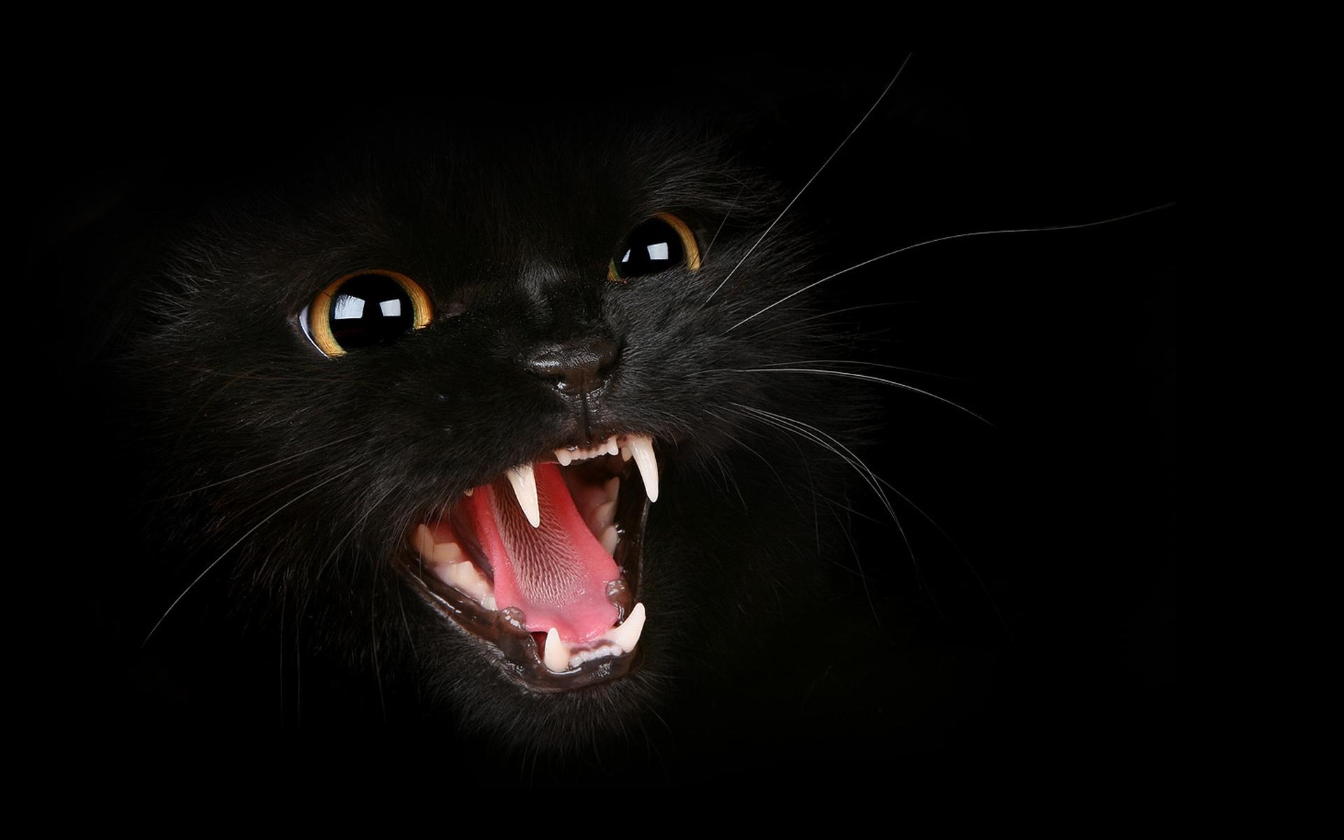 Black Cat HD Wallpaper Black Cat Images Cool Wallpapers 1920x1200