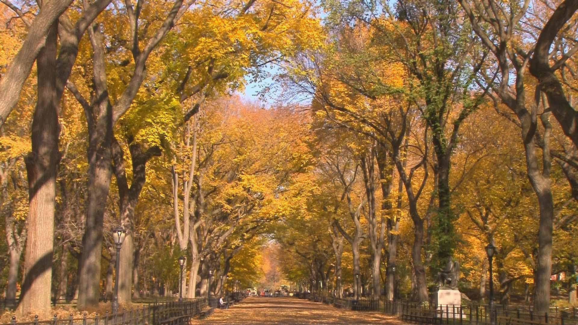 Central Park NYC Peak Fall Foliage  November 2011 1920x1080