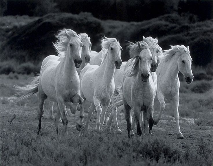 736x574px Wild Horse Wallpaper For Bedrooms Wallpapersafari