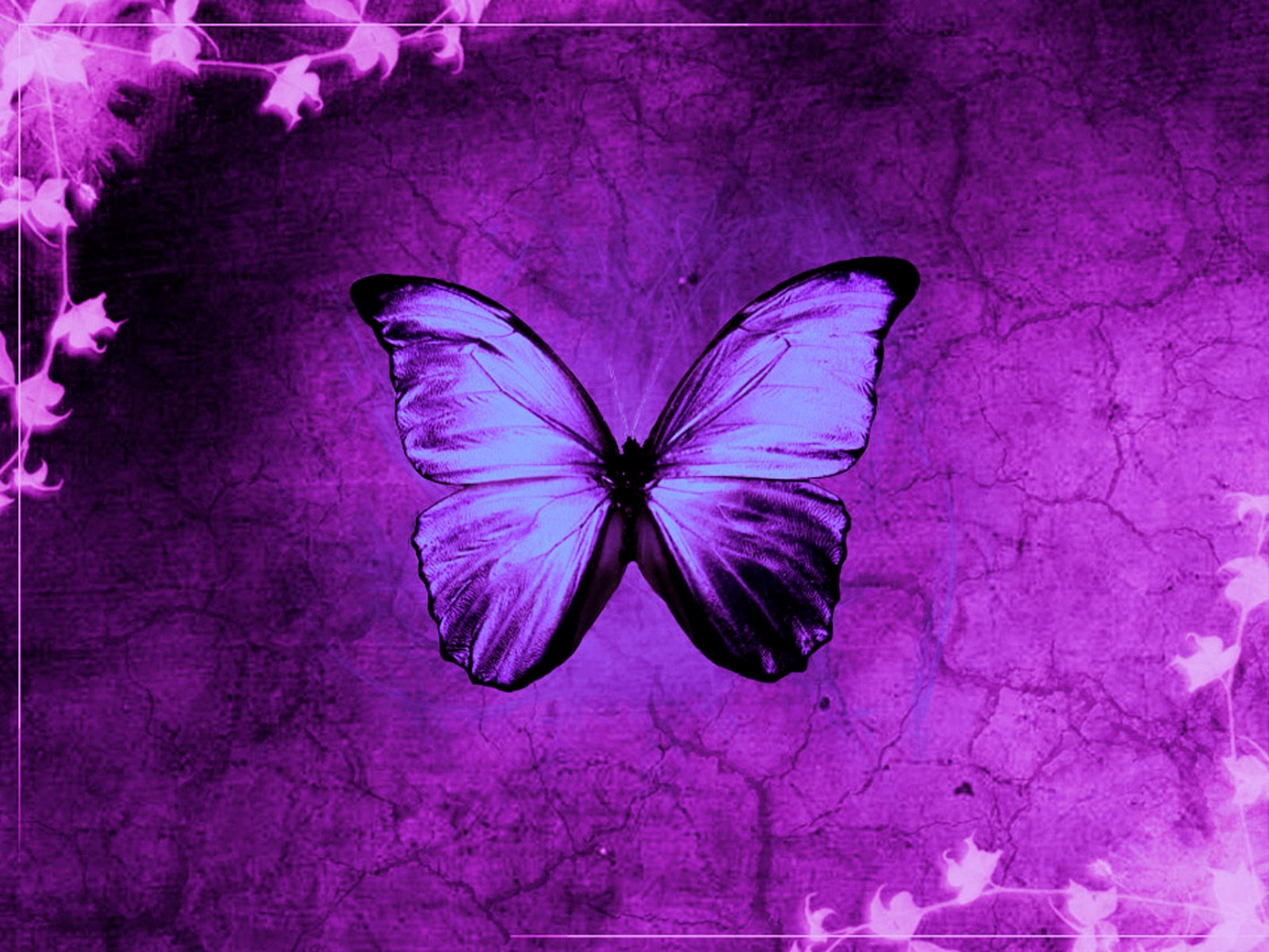 Butterfly Grass Template   PPT Backgrounds and Templates 1600x1200