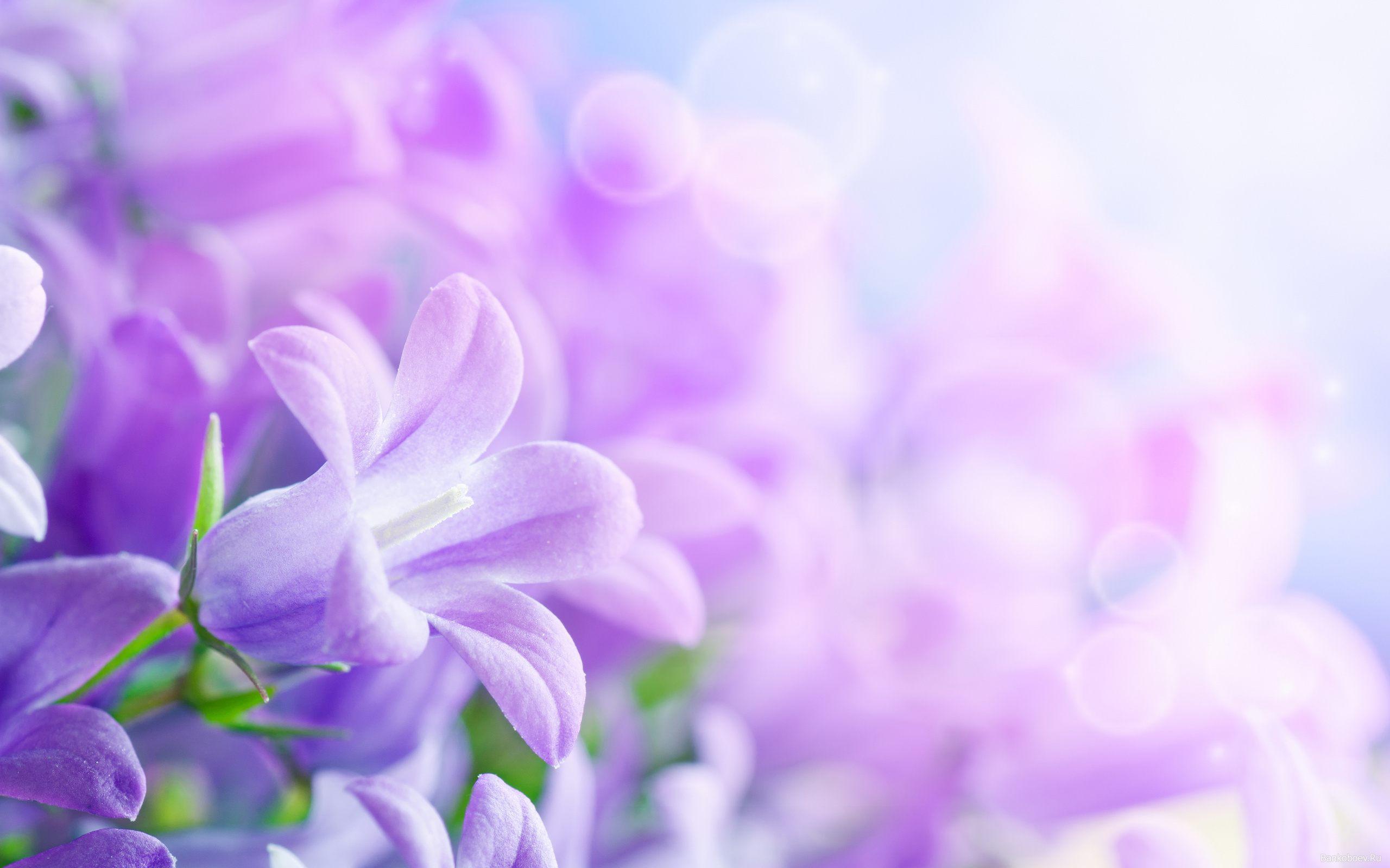 Purple Flowers Background Wallpaper Download For Desktop 2560x1600