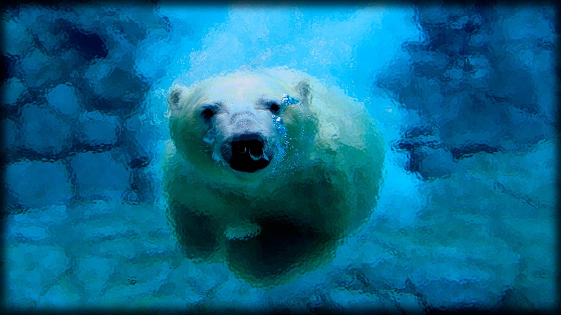 Фотообои с ныряющим медведем