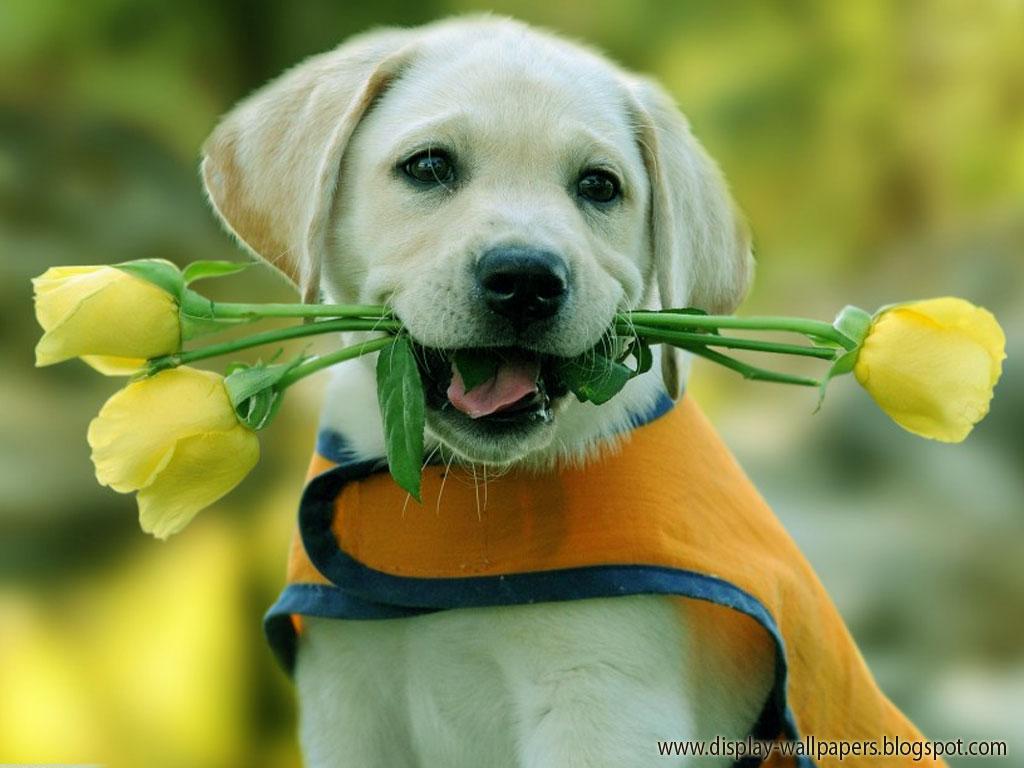 Wallpapers Download Cute Animals Wallpaper Download 1024x768