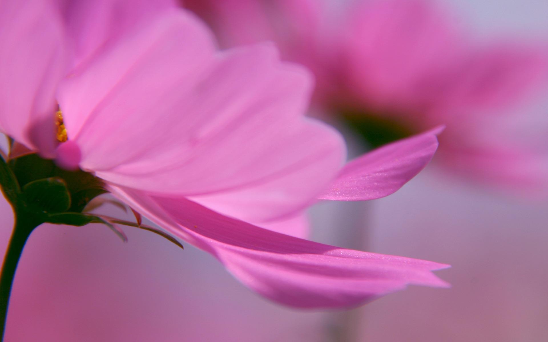 Cute Pink Flowers Wallpaper - WallpaperSafari