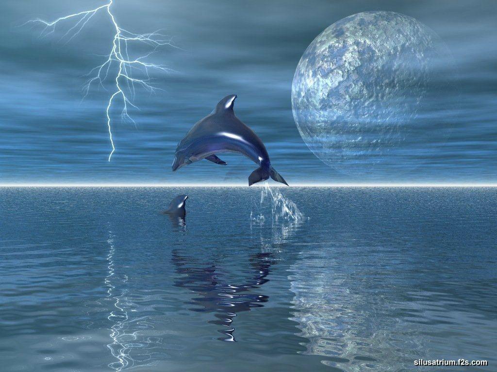 Dolphin 3D Wallpapers3 3D Wallpaper Wallpaper 1024x768