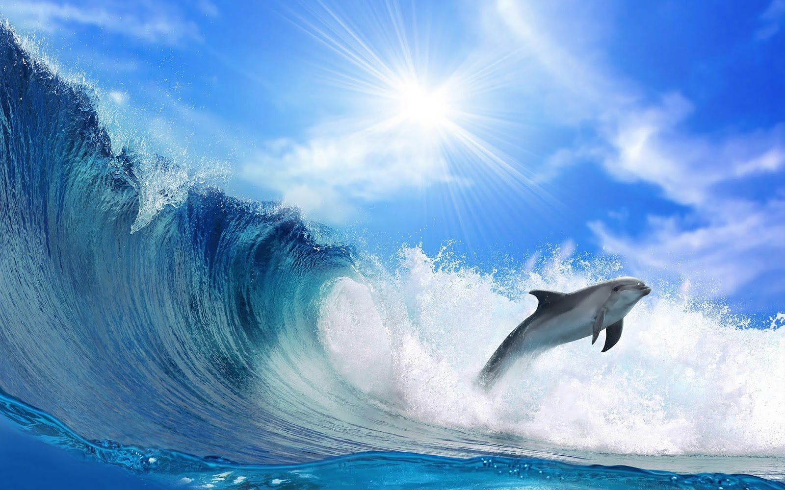 beautiful wallpaper of a dolphin and a big wave hd animals 1600x1000