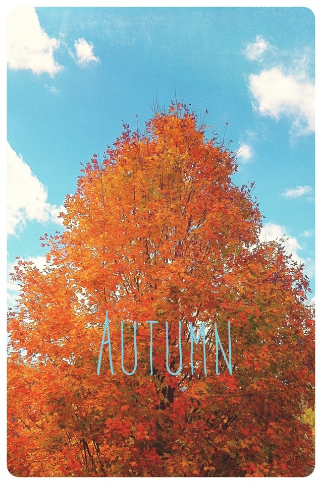 Autumn iPhone wallpaper Pictures Pinterest 638x960