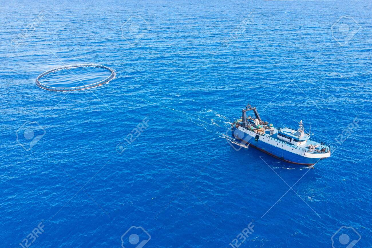 Transportation Of Fish In Cage To Farm And Port Market Blue 1300x866