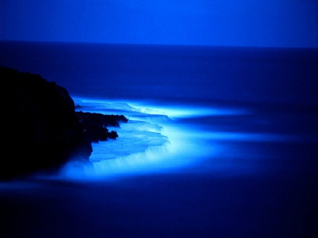 download Beach At Night wallpaper 1024x768
