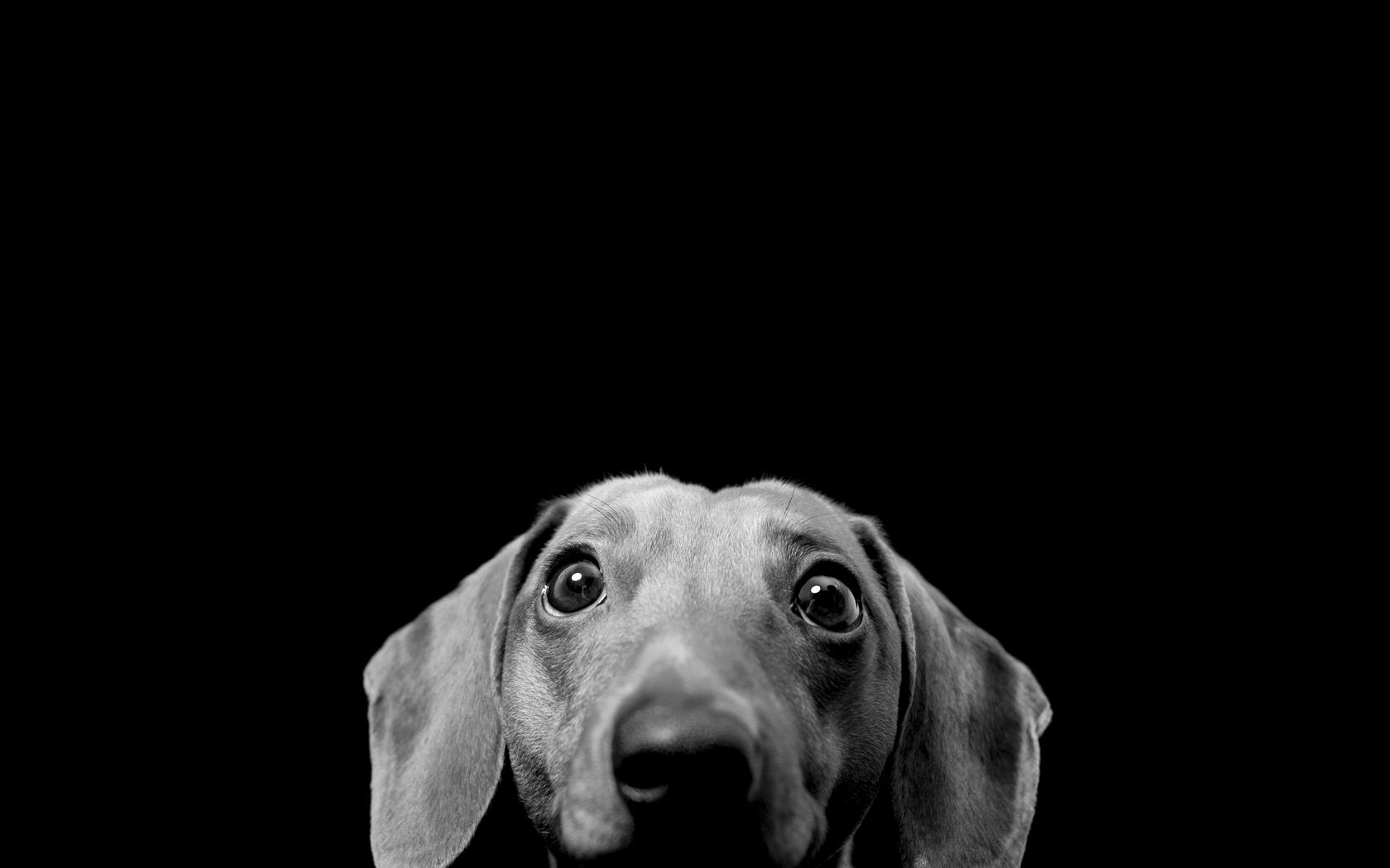 Dog Wallpaper 1680x1050 ID14604   WallpaperVortexcom 1680x1050