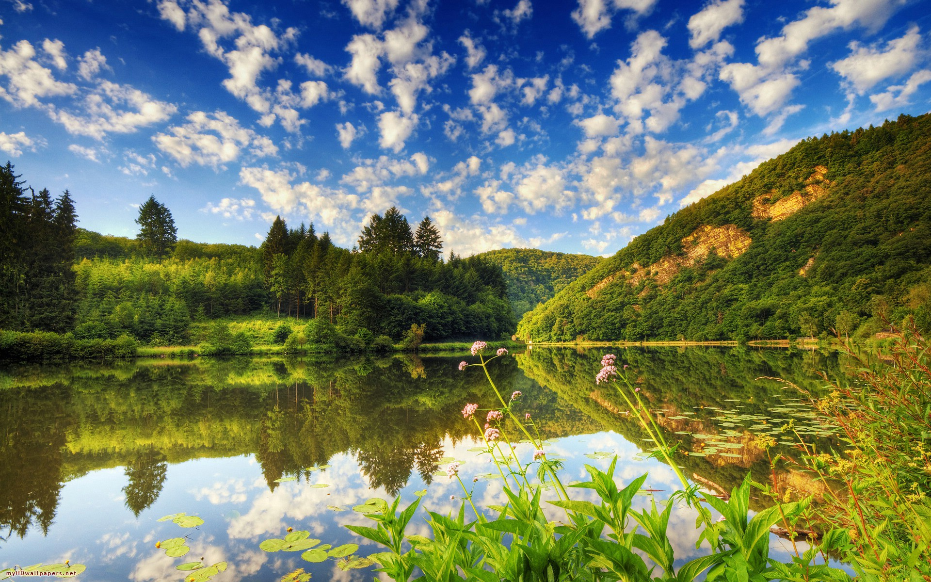 forest wallpaper on Beautiful Lake Wallpaper Wallpapers Forest 134261 1920x1200