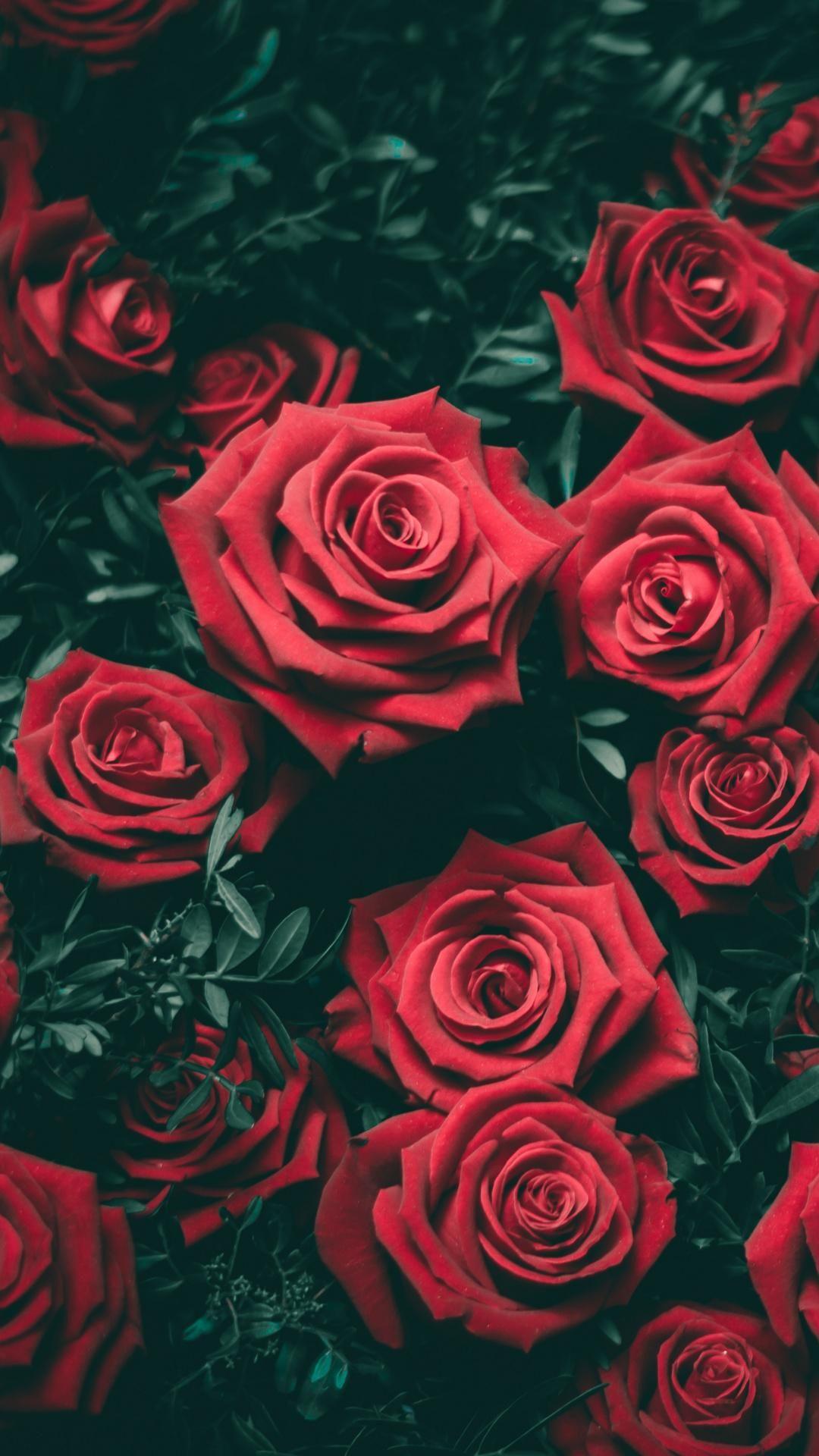 Red Roses Grntler ile iek Gller Bitki 1080x1920