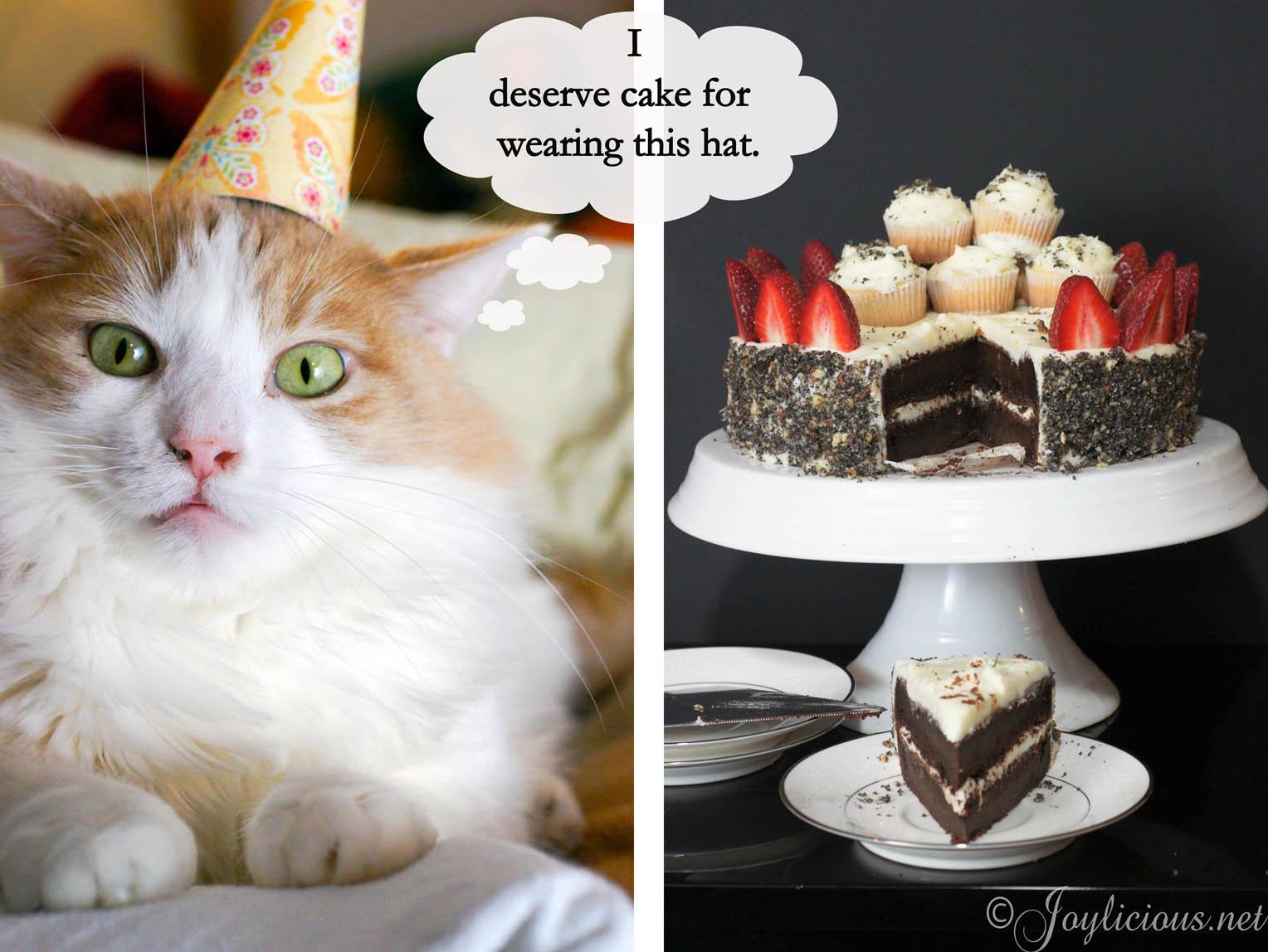 Funny Birthday Cat 33 Desktop Background Wallpaper 1528x1148