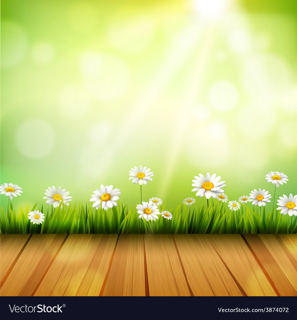 Spring Background With Daisies Royalty Vector Image 1000x1079