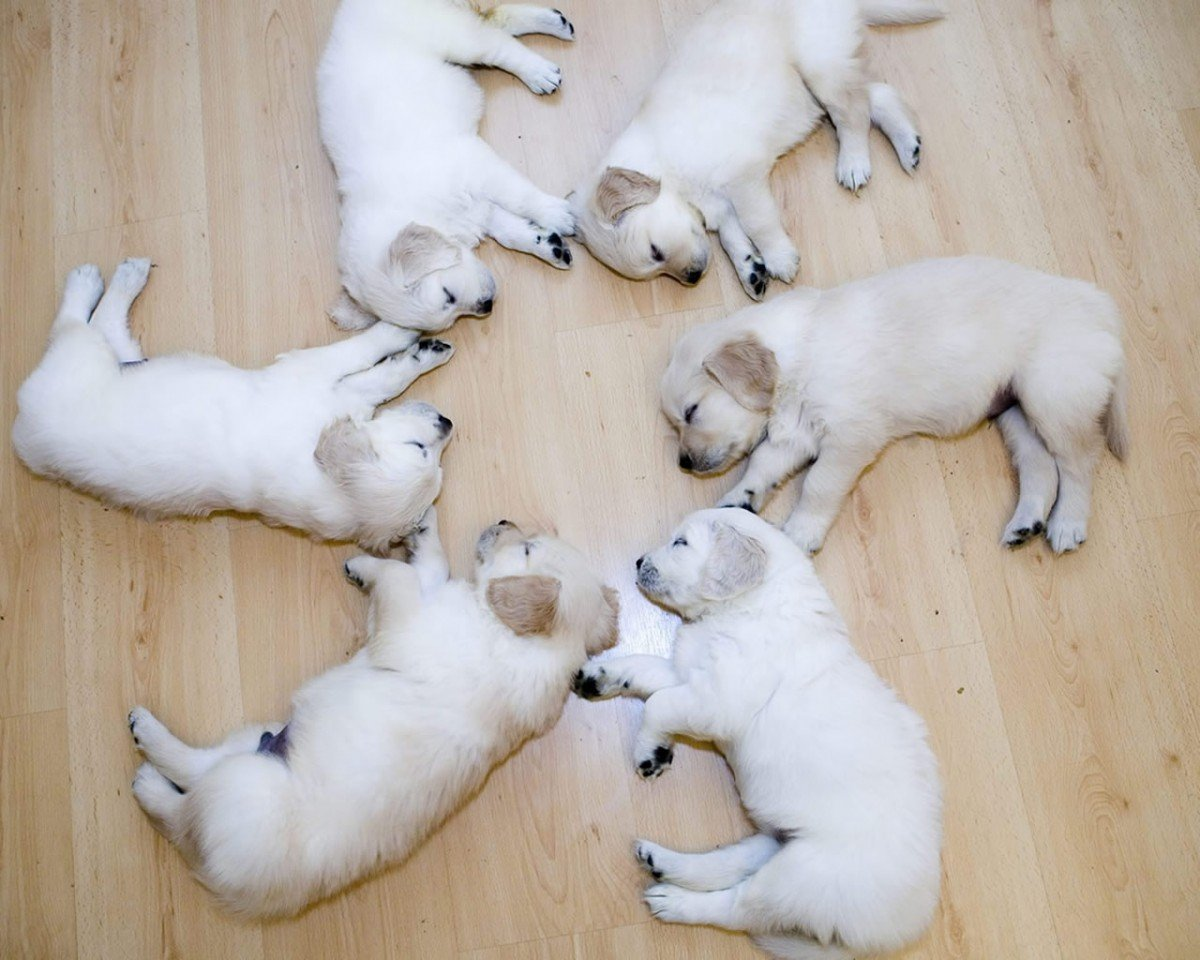dog puppy dogs funny Animals funny puppies funny dogs funny dog 1200x960