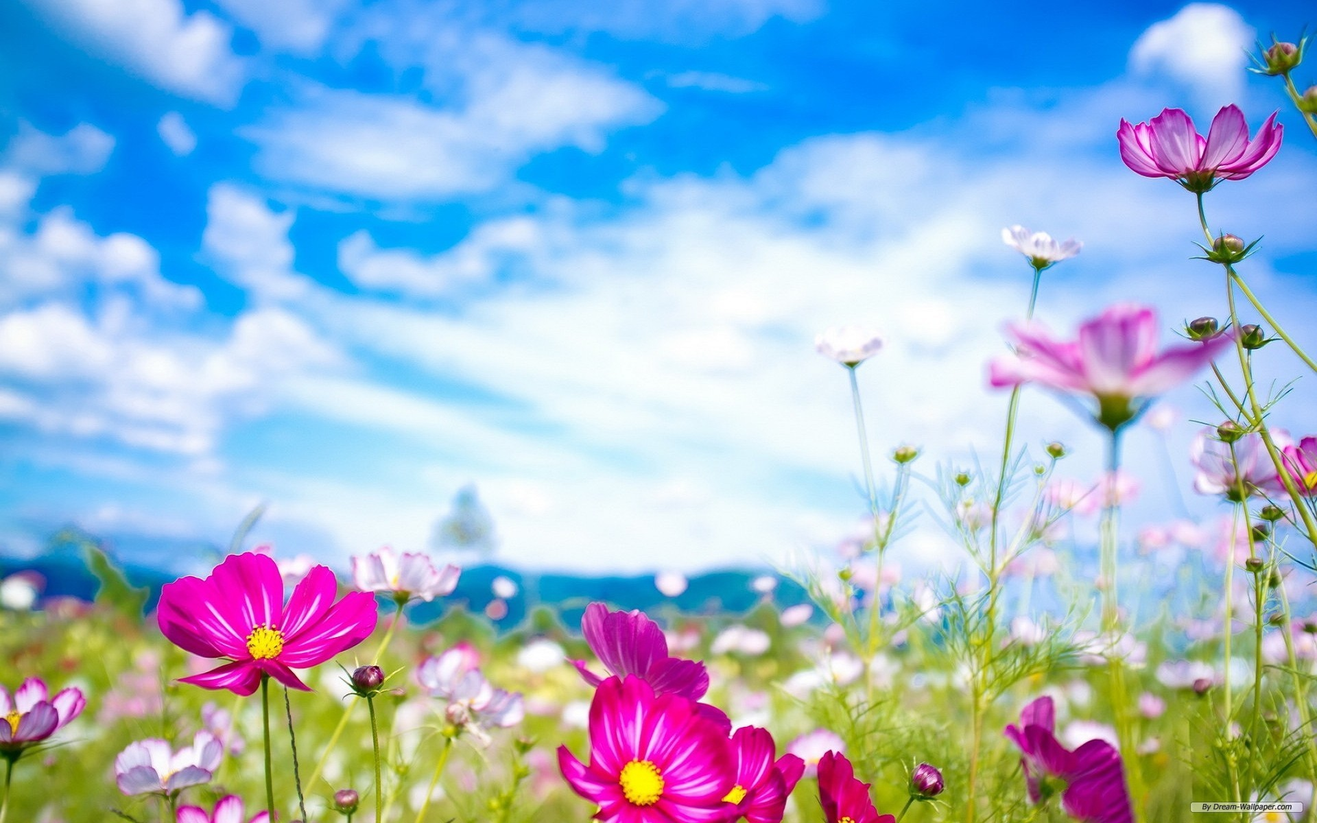 74 Spring Flower Wallpapers on WallpaperPlay 1920x1200