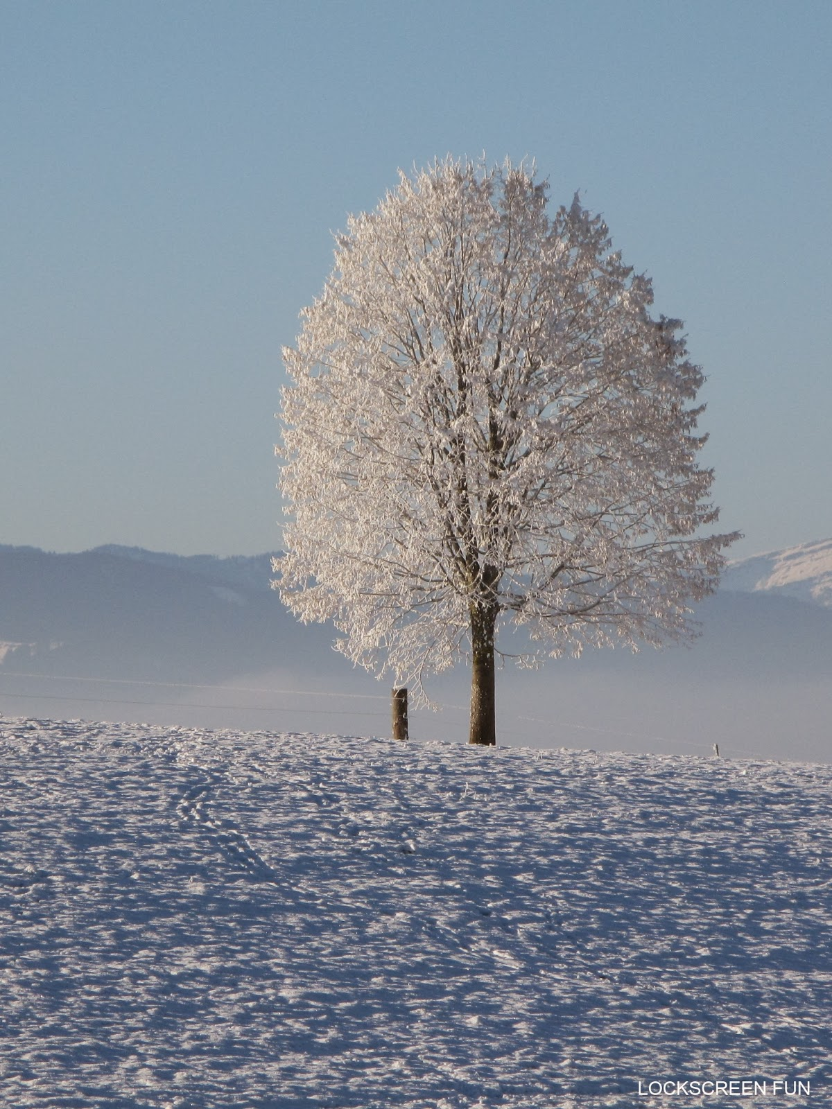 Snowy tree epic winter picture get this on your iPad Mini by tapping 1200x1600