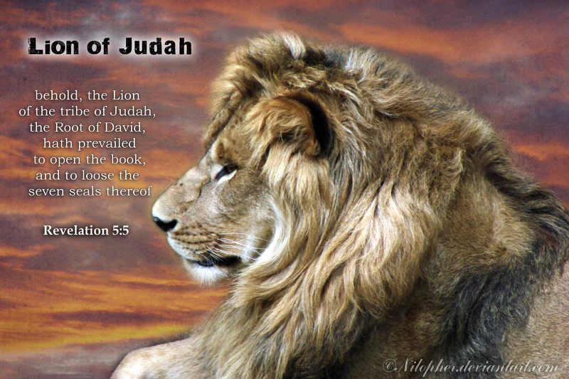 Lion Of Judah Wallpaper 800x533