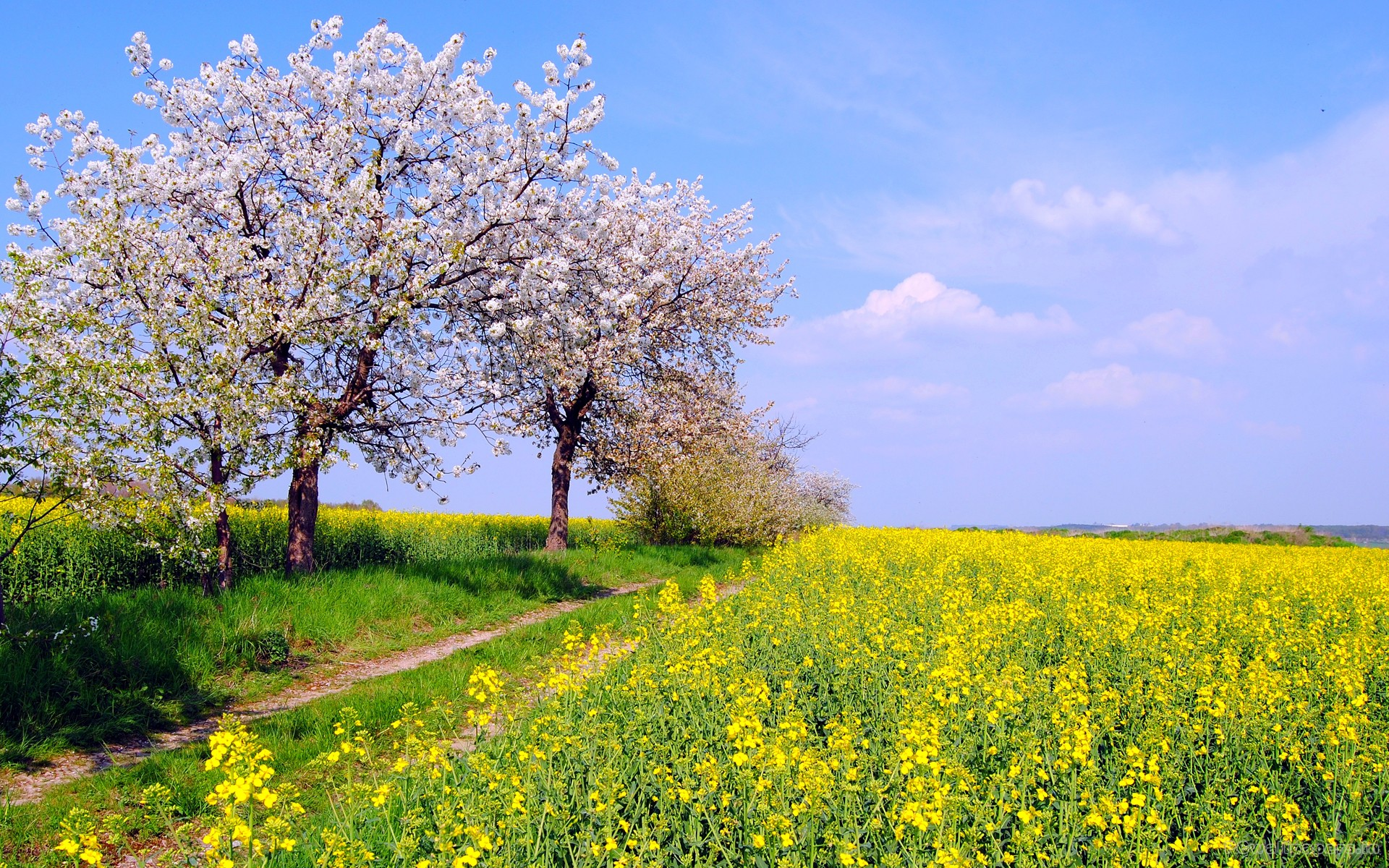 spring widescreen wallpaper which is under the spring wallpapers 1920x1200