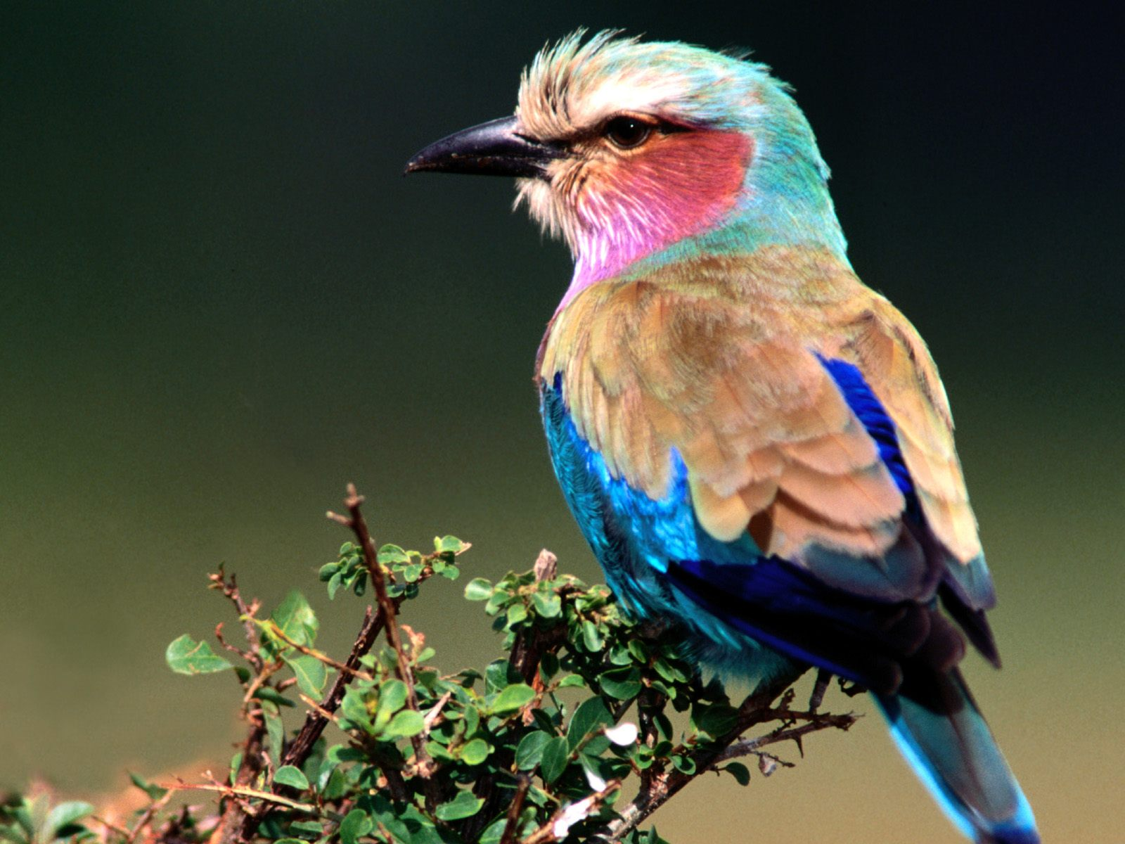 Beautiful Birds Wallpapers   Birds Desktop Wallpapers 1600x1200