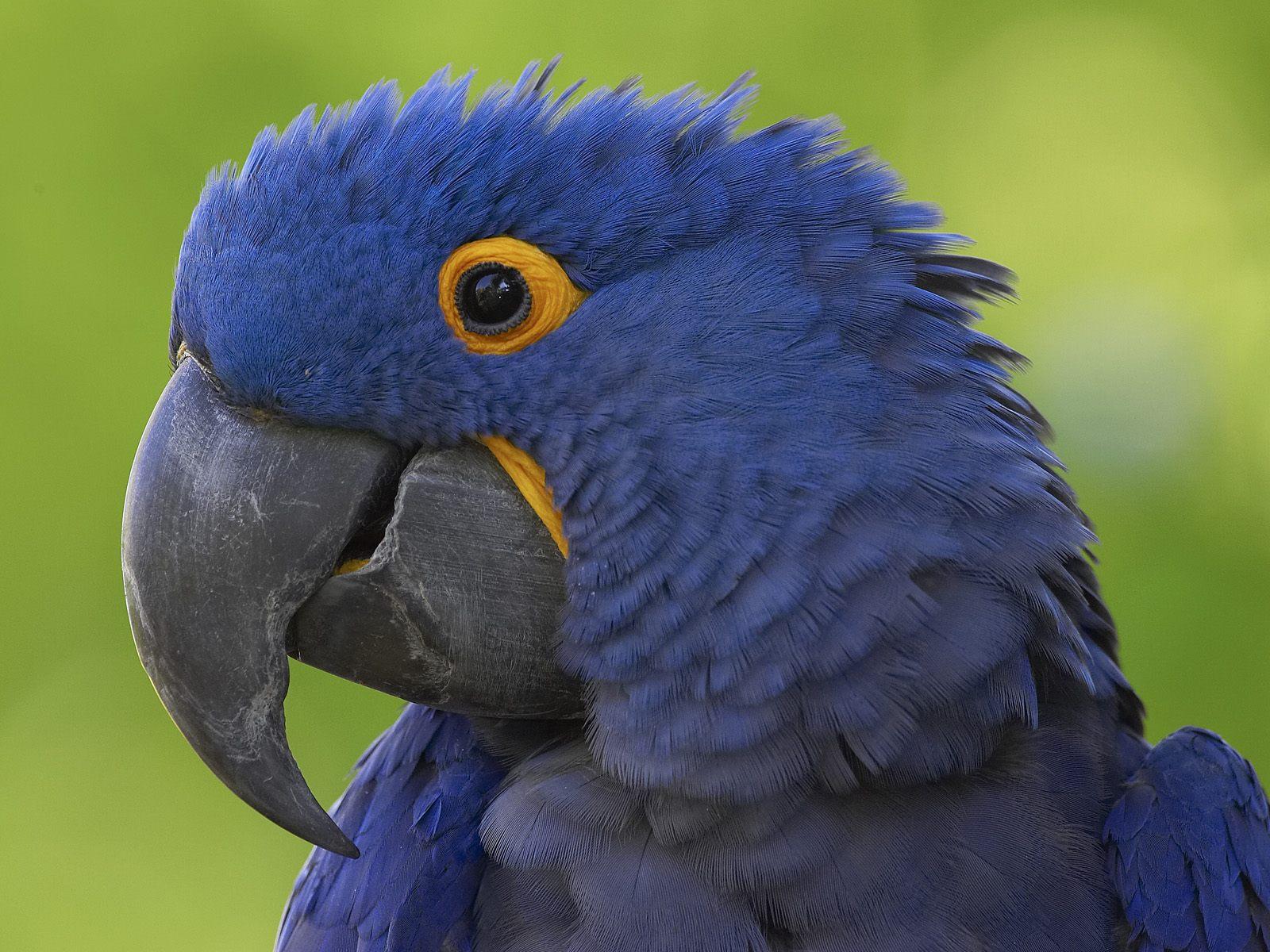 BLUE BIRD IMAGE WALLPAPER   331   HD Wallpapers   [WallpapersInHQ 1600x1200