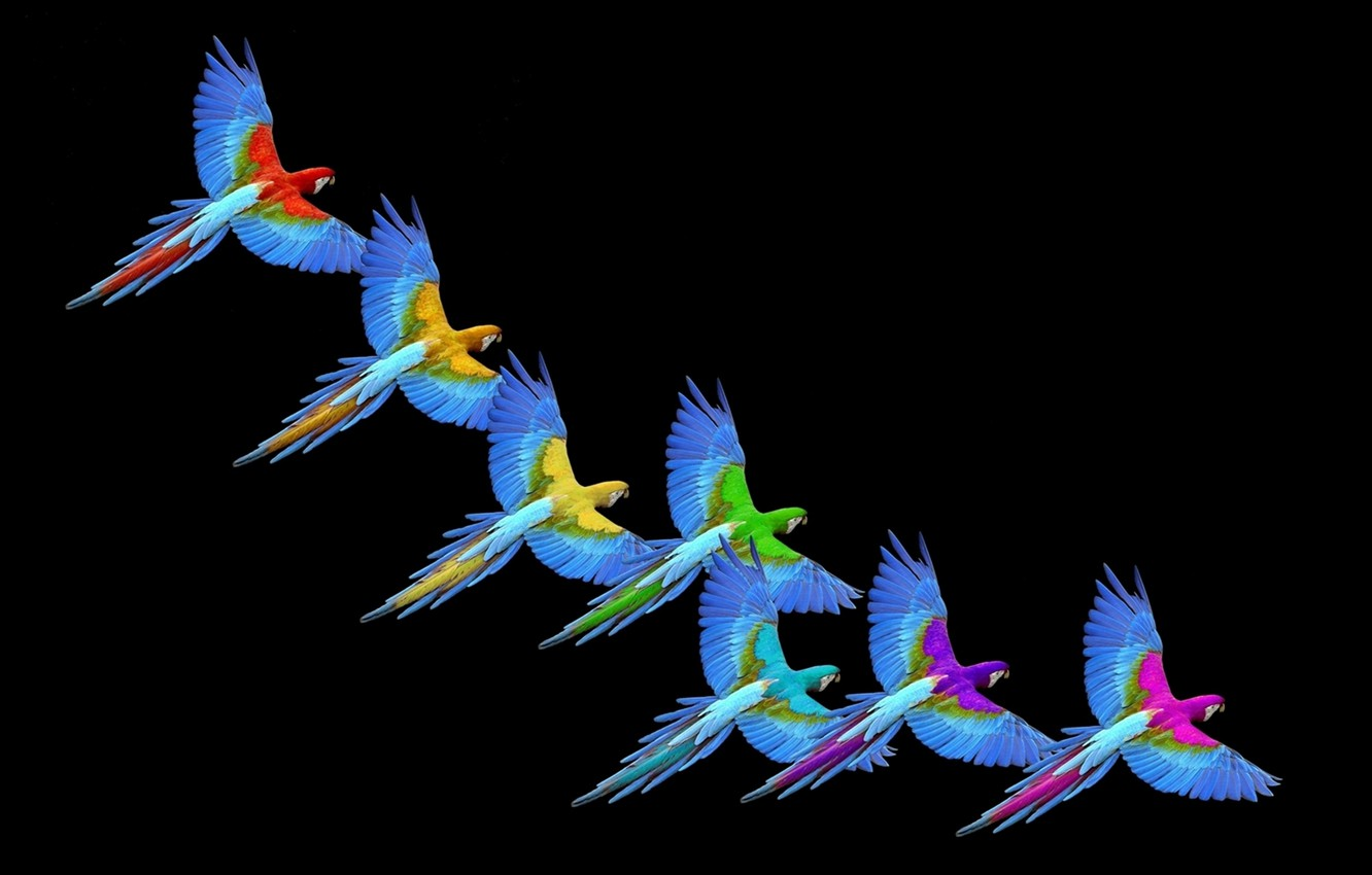 Wallpaper Rainbow Colors Macaw images for desktop section 1332x850