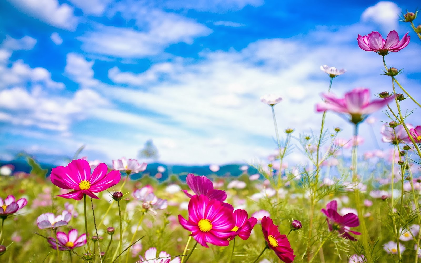 Summer flowers wallpaper   beautiful desktop wallpapers 2014 1600x1000
