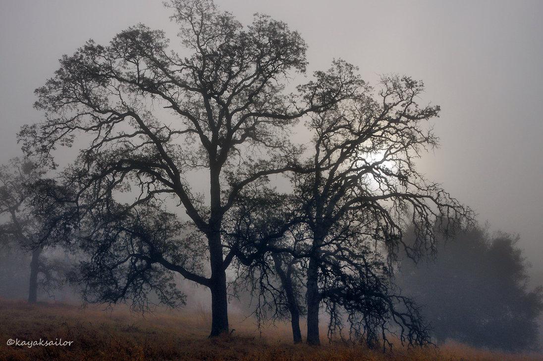 Oak trees in fog wallpaper by kayaksailor on deviantART 1096x728