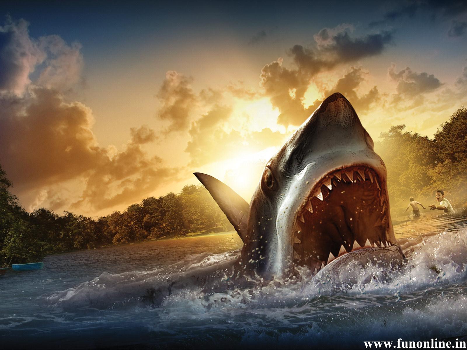46 ] Free Shark Wallpaper Great White On WallpaperSafari