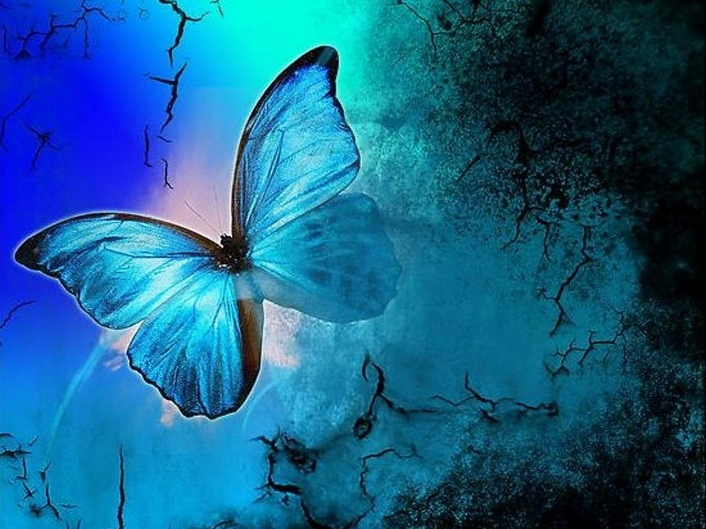 Blue Butterfly Wallpapers 1024x768