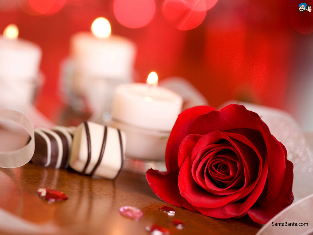 39 bed of roses wallpaper on wallpapersafari - Pics of red roses in hd ...