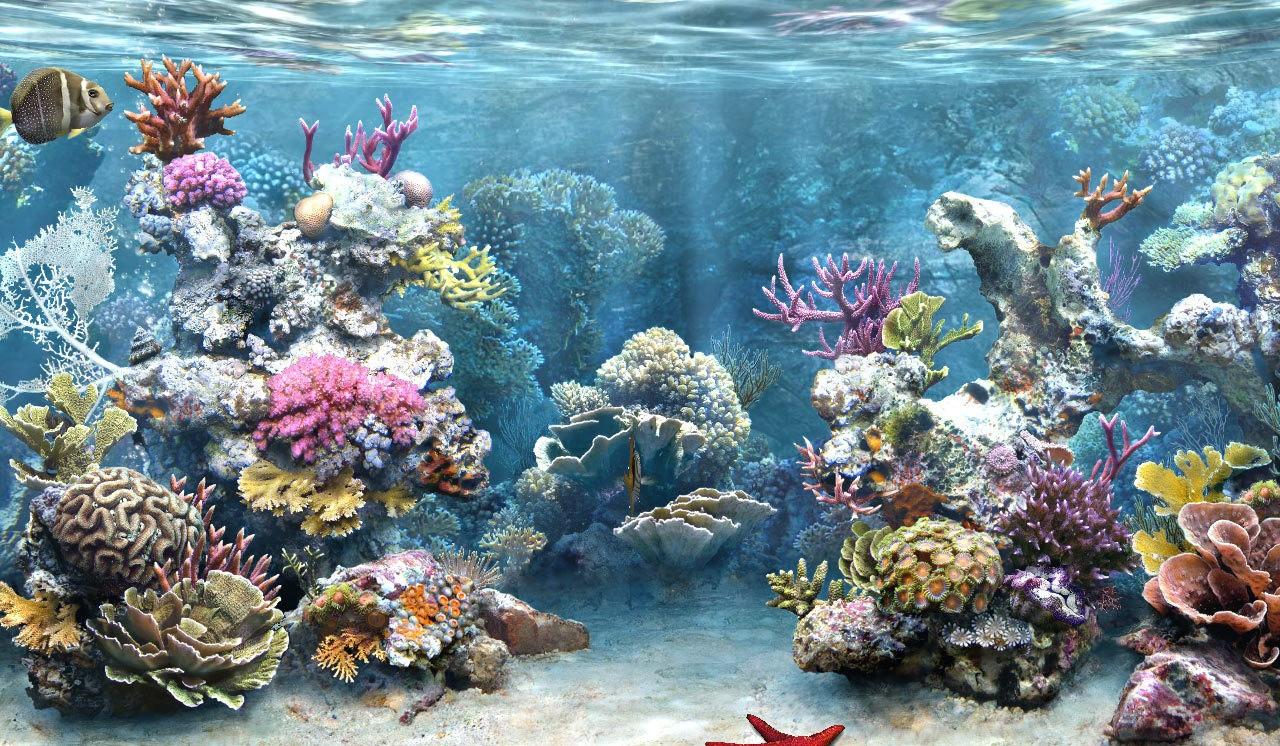[50+] Live Aquarium Wallpaper with Sound on WallpaperSafari