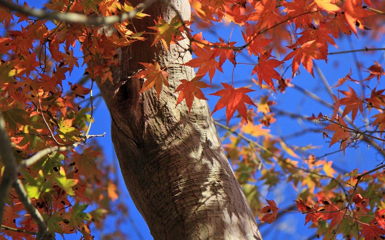 Travel Japan   Beautiful Fall scenery in Rokkosan 1280800 NO15 1280x800