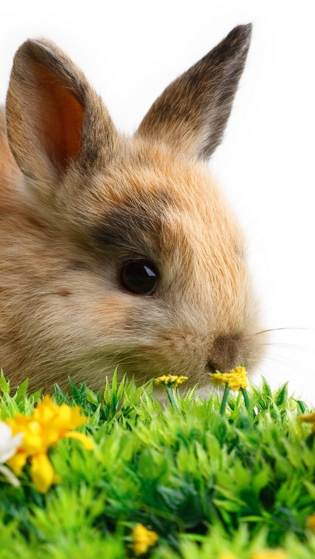 Download Lovely Easter 2013 Bunnies iPhone 5 HD Wallpapers 640x1136
