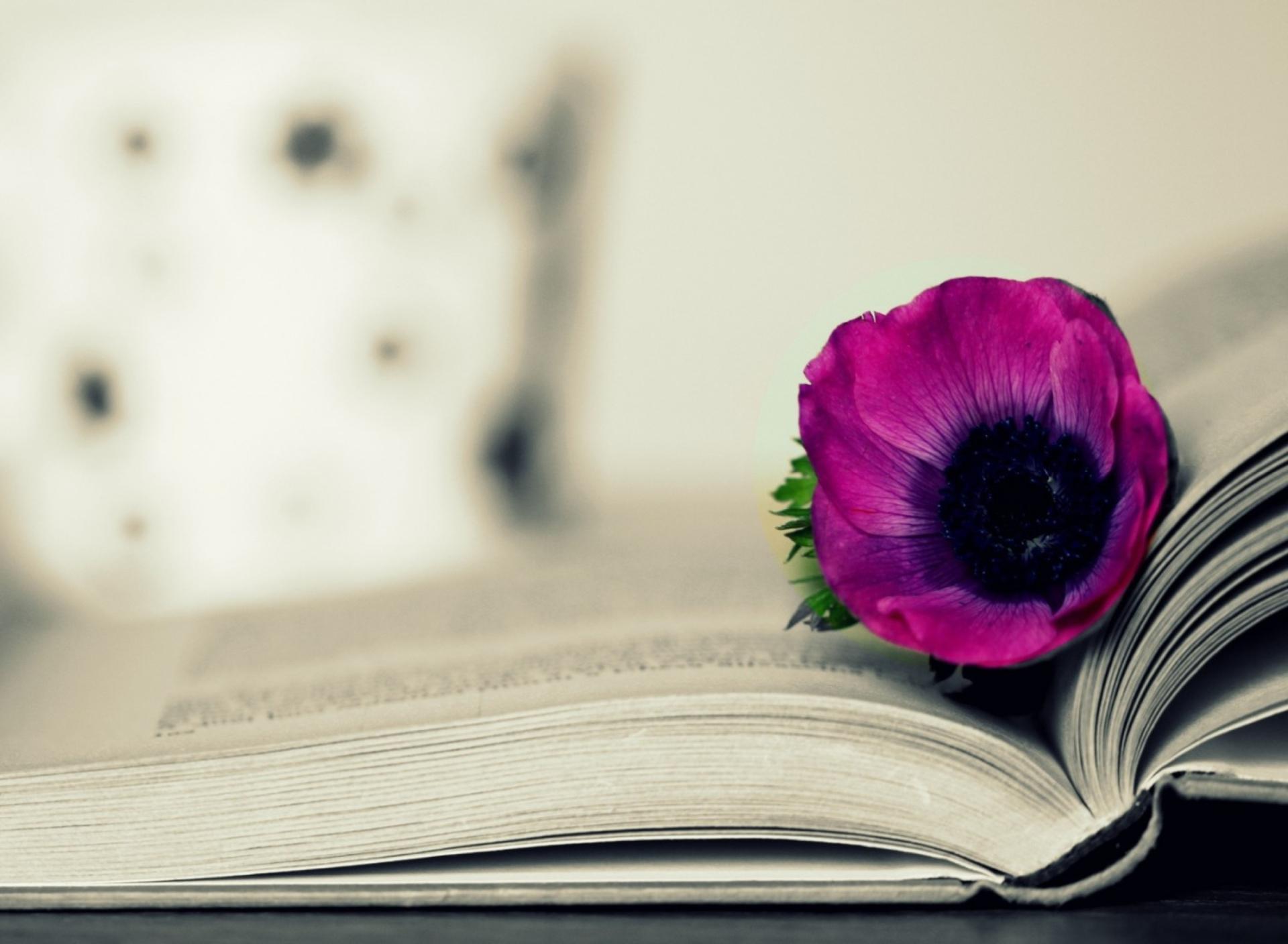 Purple Flower On Open Book Wallpaper for Kindle Fire HD 1920x1408