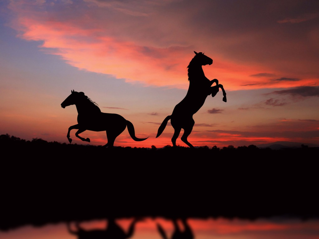 Horse Desktop Backgrounds One HD Wallpaper Pictures Backgrounds FREE 1024x768