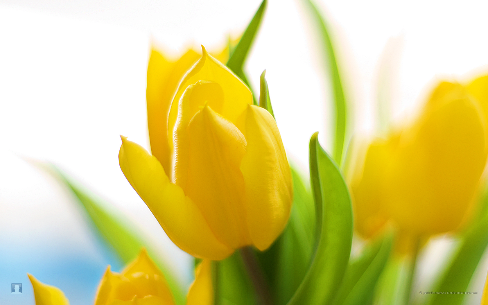 from spring flower desktop wallpaper wallpaper spring flower desktop 1680x1050