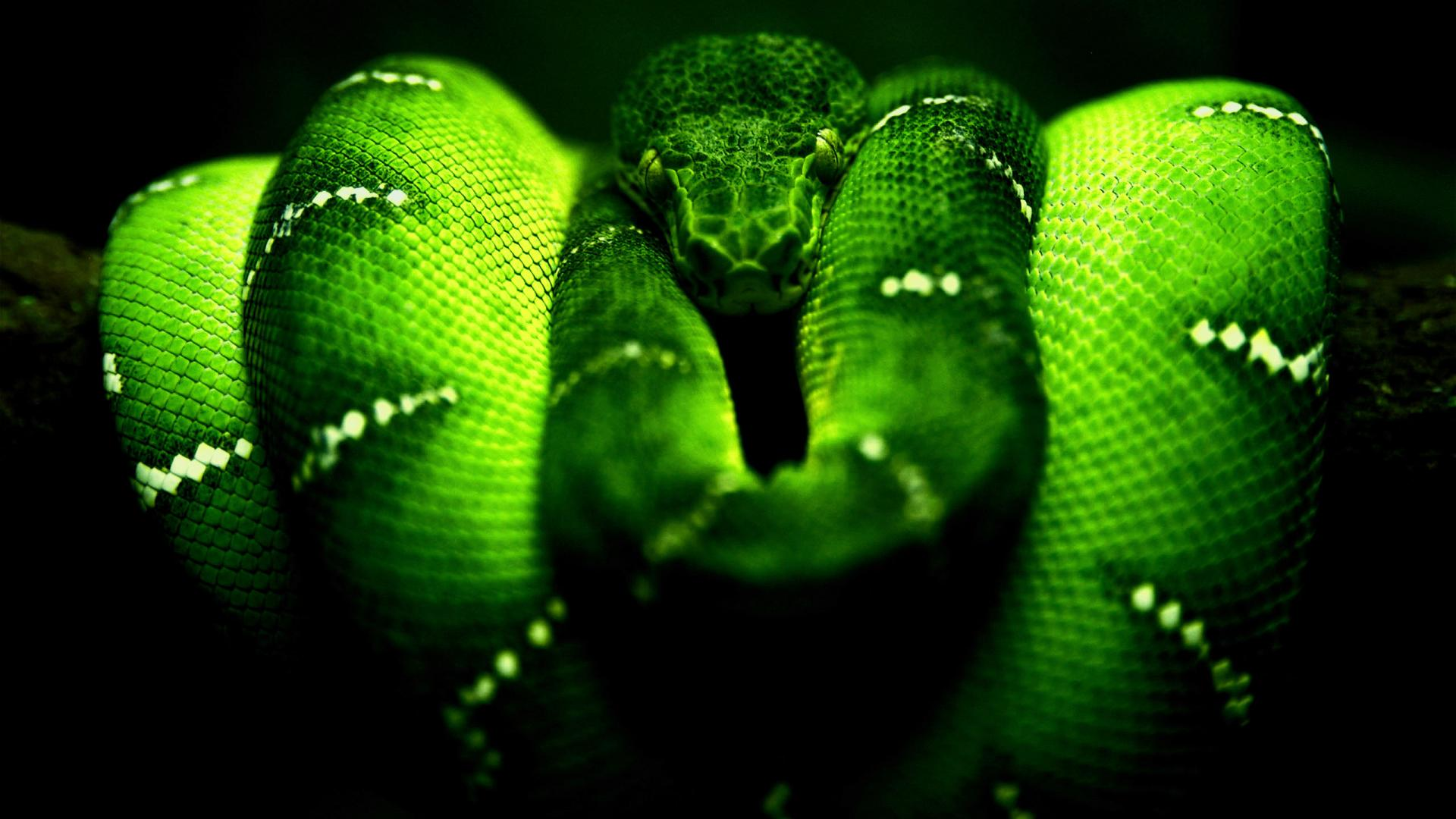 29 Neon Snakes Wallpapers On Wallpapersafari