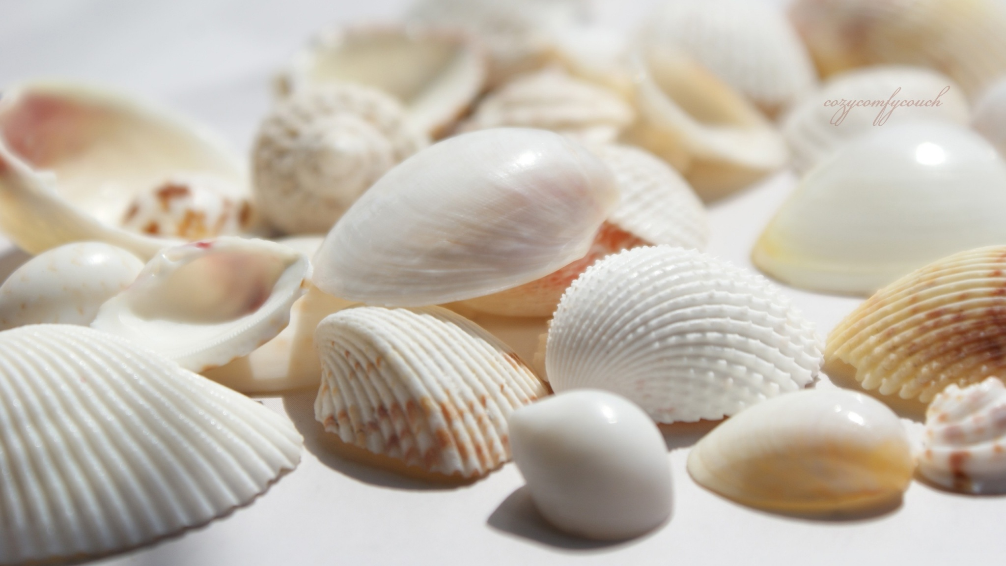 Seashells 4K HD Desktop Wallpaper for 4K Ultra HD TV Dual 2048x1152