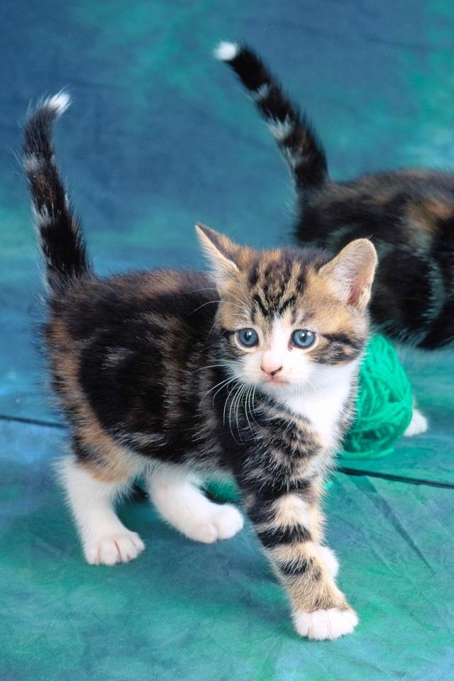Images Of Funny Cat Iphone Wallpaper Calto