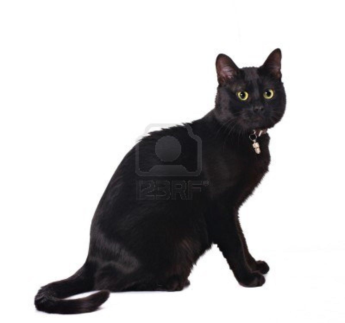 Free Download Art Hd Black Cat Clipart Wallpaper Beautiful Cats Wallpaper Pictures 1200x1122 For Your Desktop Mobile Tablet Explore 48 Black Cat Wallpaper Drawings Cats Wallpaper Cat Wallpaper 1920x1080