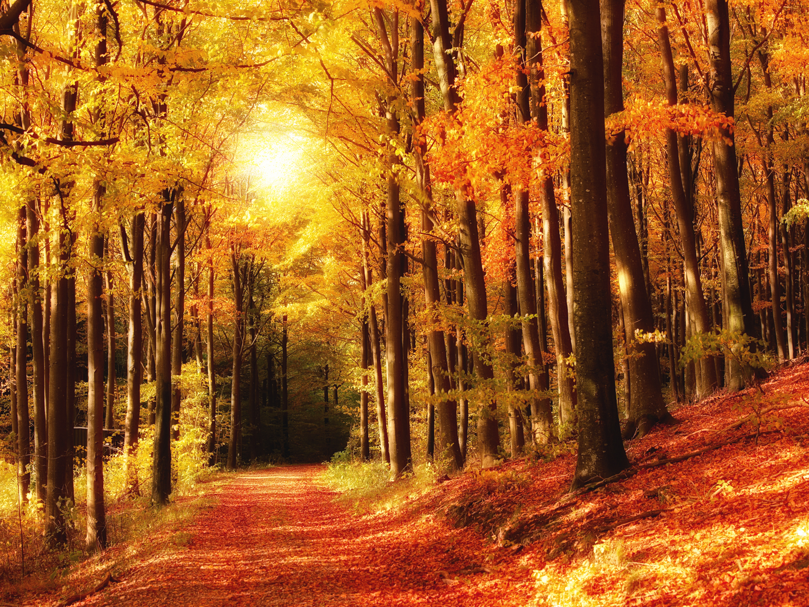 Dreamy Autumn wallpaper Conservatives Declare War on English and 1600x1200